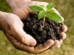 Compost per il terreno